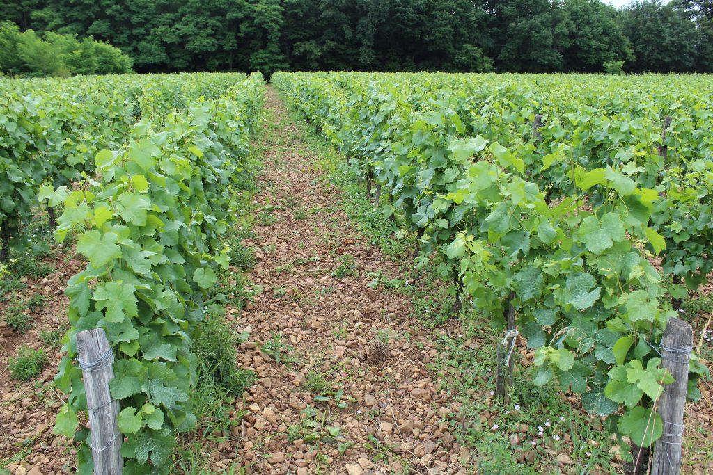 Propriété viticole à vendre de 1.33 HA - beaujolais