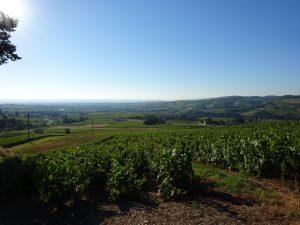 Propriété viticole à vendre de 10.51 HA - beaujolais