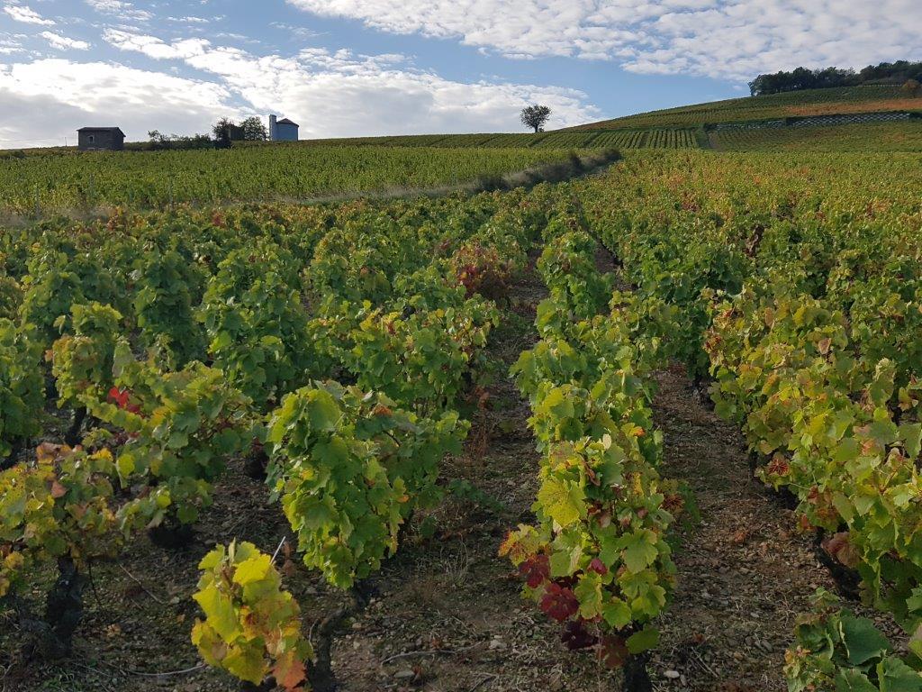 Propriété viticole à vendre de 14.11 HA - beaujolais