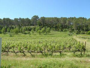 Propriété viticole à vendre de 20 HA - provence