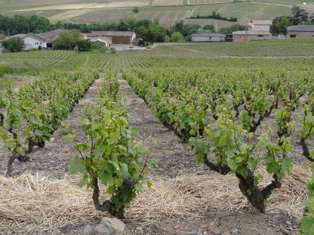 Propriété viticole à vendre de 4.3 HA - beaujolais