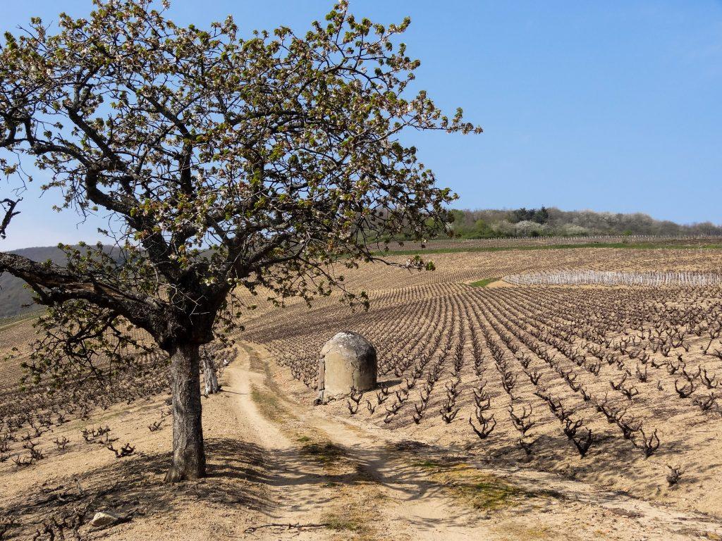 Propriété viticole à vendre de 4.64 HA - beaujolais