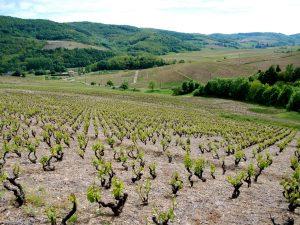 Propriété viticole à vendre de 4.65 HA - beaujolais