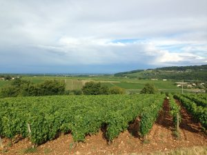 Propriété viticole à vendre de 4.94 HA - bourgogne