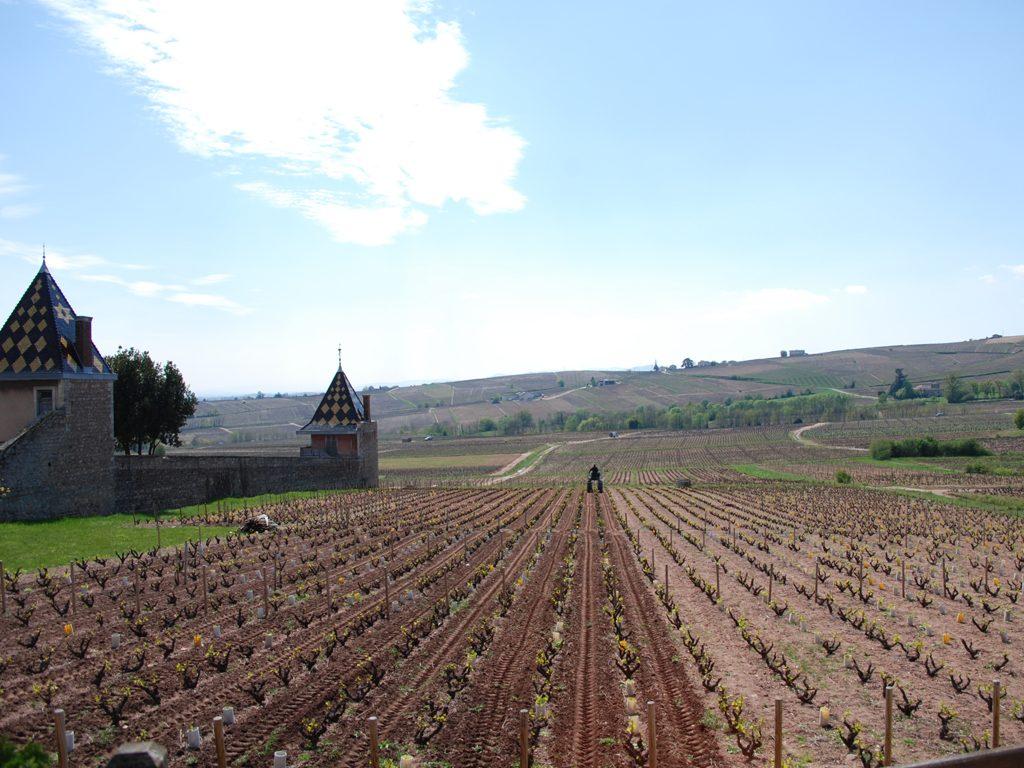 Propriété viticole à vendre de 5.8 HA - beaujolais