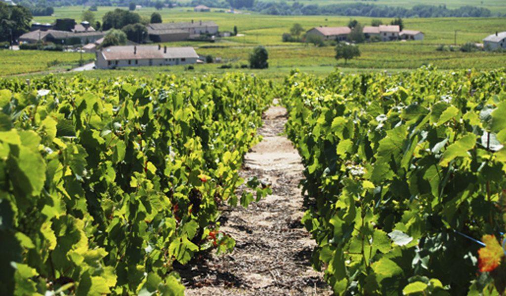 Propriété viticole à vendre de 6.2 HA - beaujolais