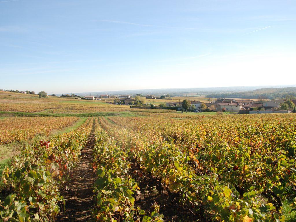 Propriété viticole à vendre de 6.23 HA - beaujolais