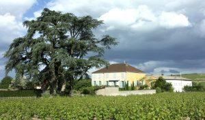 Propriété viticole à vendre de 7.3 HA - beaujolais