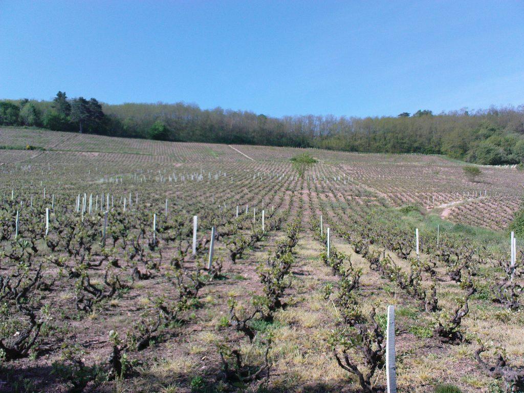 Propriété viticole à vendre de 8.82 HA - beaujolais