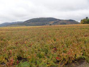 Vigne à vendre de 0.25 HA - beaujolais