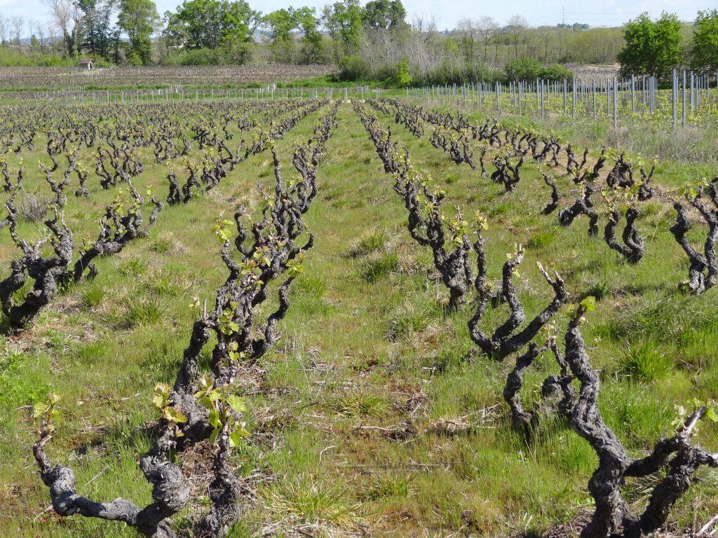 Vigne à vendre de 0.34 HA - beaujolais