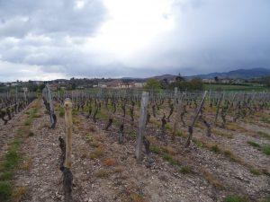 Vigne à vendre de 0.41 HA - bourgogne
