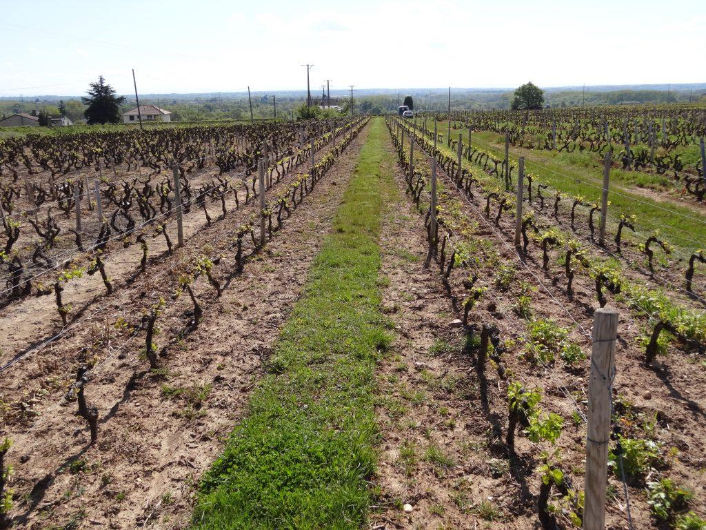 Vigne à vendre de 0.68 HA - beaujolais