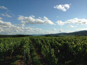 Vigne à vendre de 0.71 HA - bourgogne