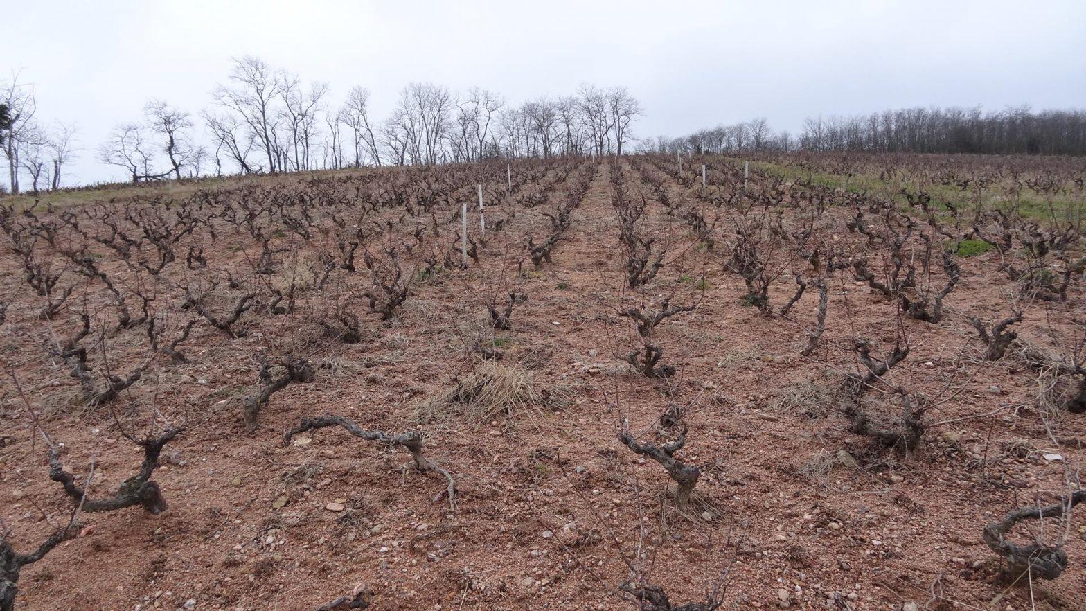 Vigne à vendre de 0.89 HA - beaujolais