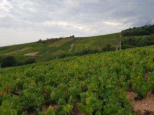 Vigne à vendre de 0.98 HA - beaujolais