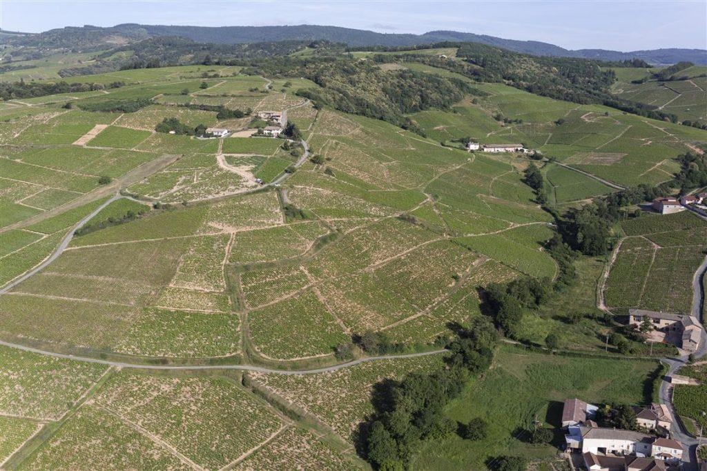 Vigne à vendre de 1.02 HA - beaujolais