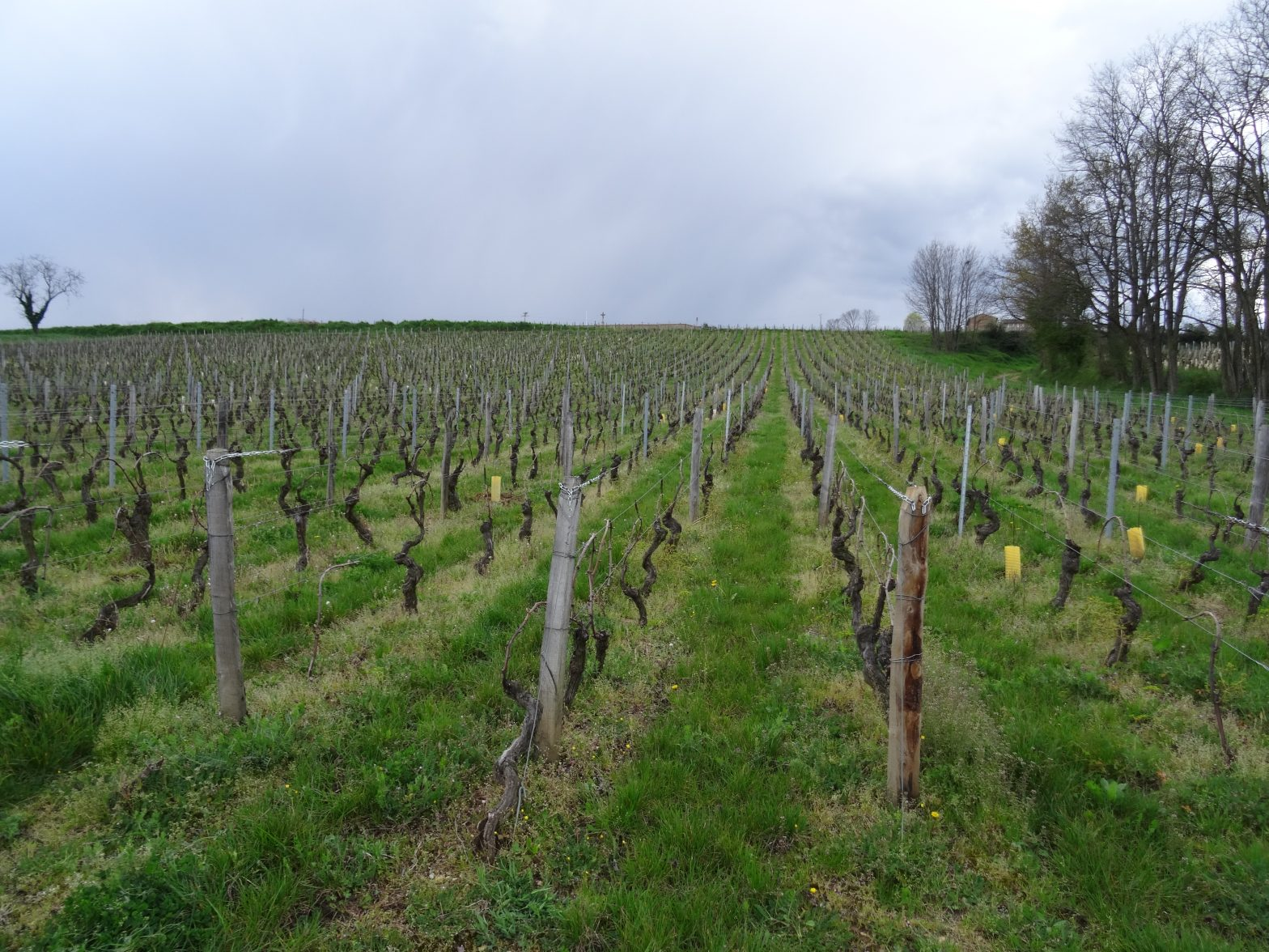 Vigne à vendre de 1.11 HA - bourgogne