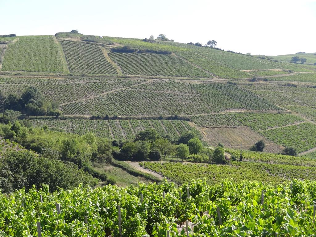 Vigne à vendre de 1.19 HA - beaujolais