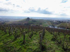 Vigne à vendre de 1.21 HA - beaujolais