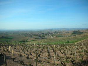 Vigne à vendre de 1.3 HA - beaujolais