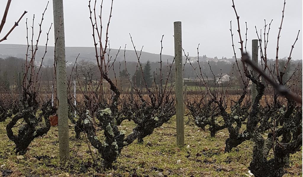 Vigne à vendre de 1.44 HA - beaujolais