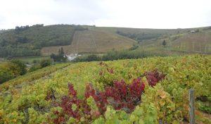 Vigne à vendre de 1.6 HA - beaujolais