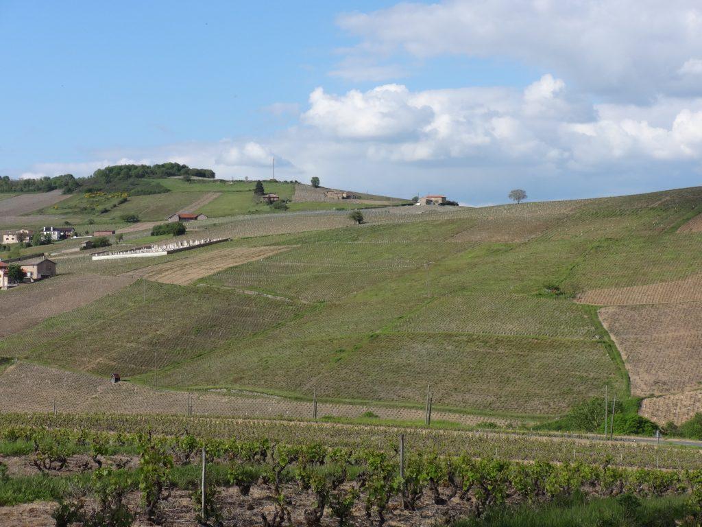 Vigne à vendre de 1.61 HA - beaujolais