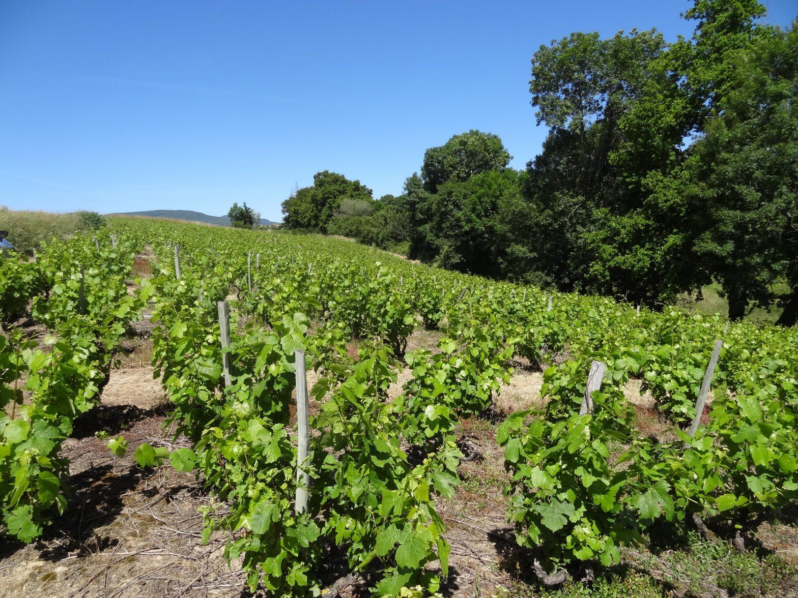 Vigne à vendre de 1.7 HA - beaujolais
