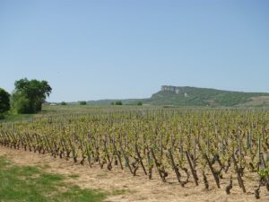 Vigne à vendre de 1 HA - bourgogne