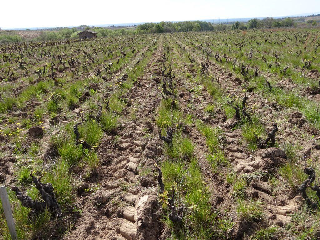 Vigne à vendre de 2.13 HA - beaujolais
