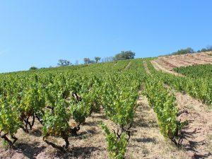 Vigne à vendre de 2.35 HA - beaujolais