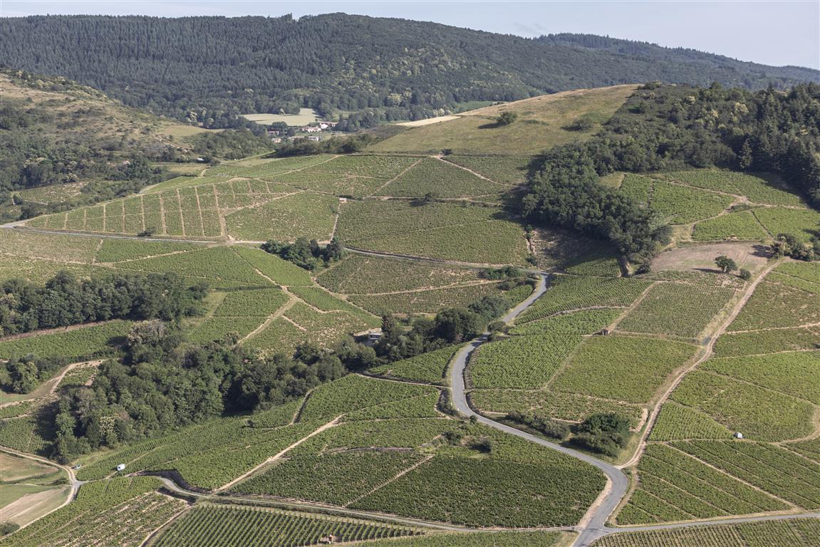 Vigne à vendre de 2.39 HA - beaujolais