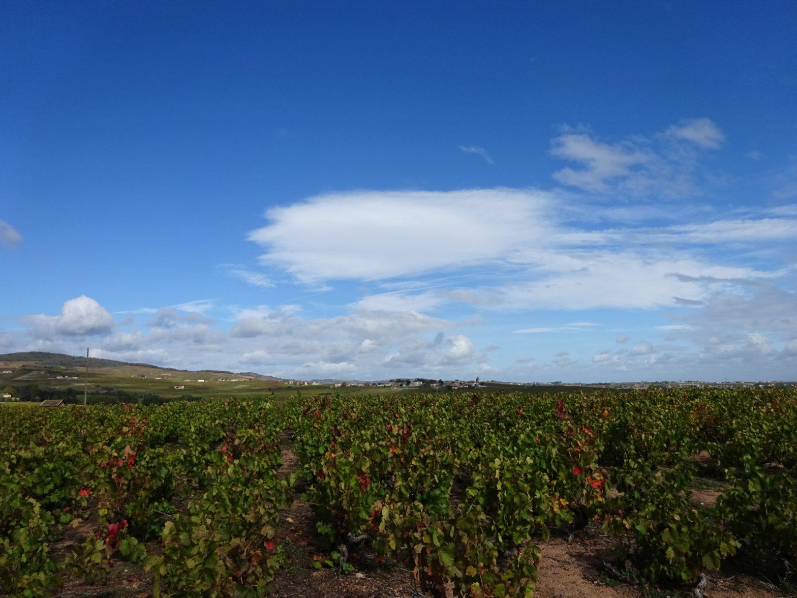 Vigne à vendre de 2.98 HA - beaujolais