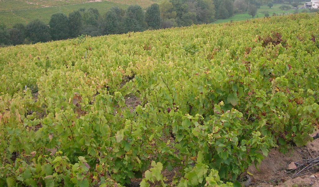 Vigne à vendre de 2 HA - beaujolais