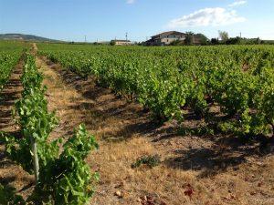 Vigne à vendre de 3.21 HA - beaujolais