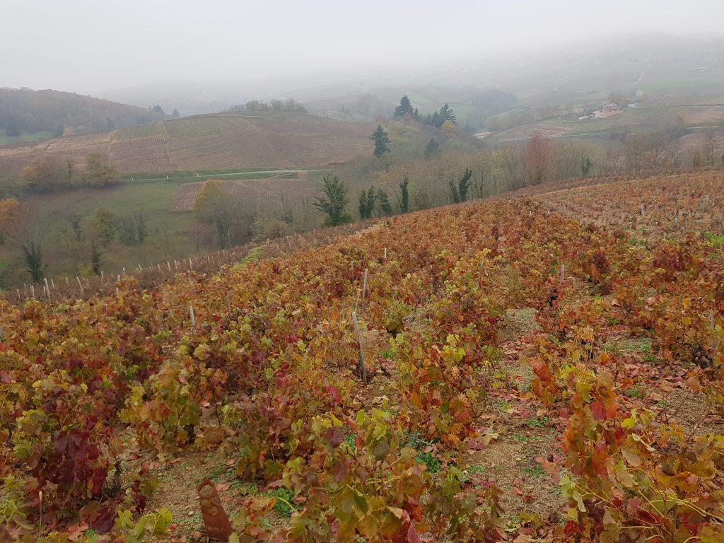 Vigne à vendre de 3.3 HA - beaujolais