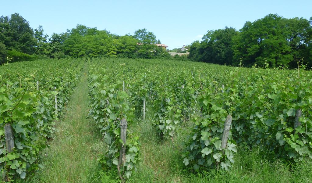Vigne à vendre de 3.5 HA - bourgogne
