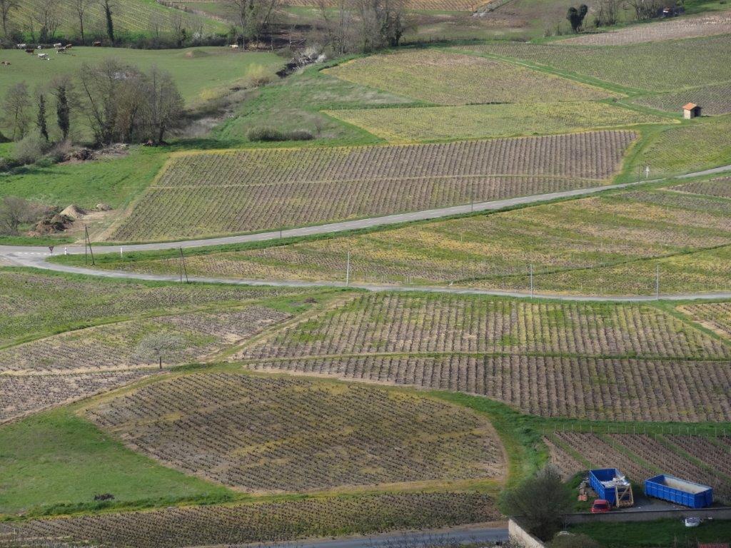 Vigne à vendre de 4 HA - beaujolais