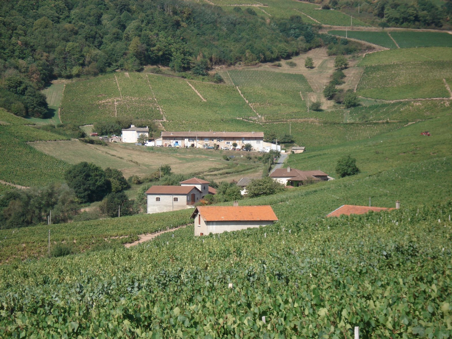 Vigne à vendre de 6.4 HA - beaujolais