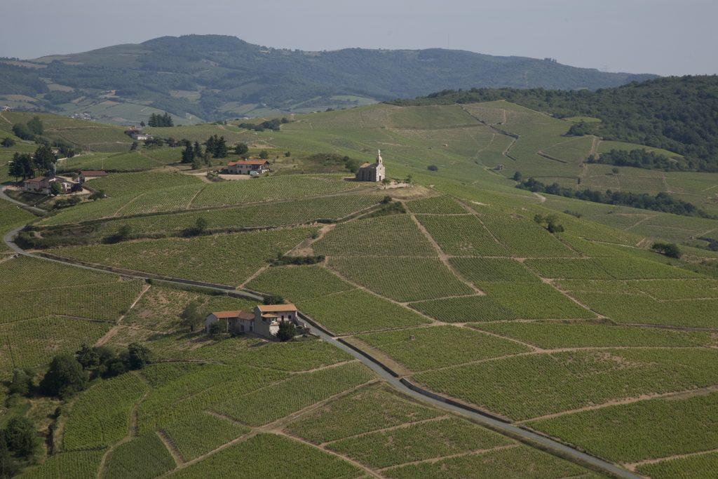 Vigne à vendre de 7 HA - beaujolais