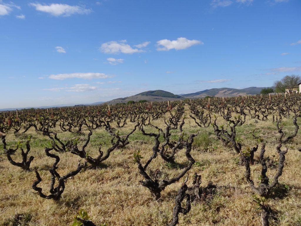 Vigne à vendre de 8 HA - beaujolais