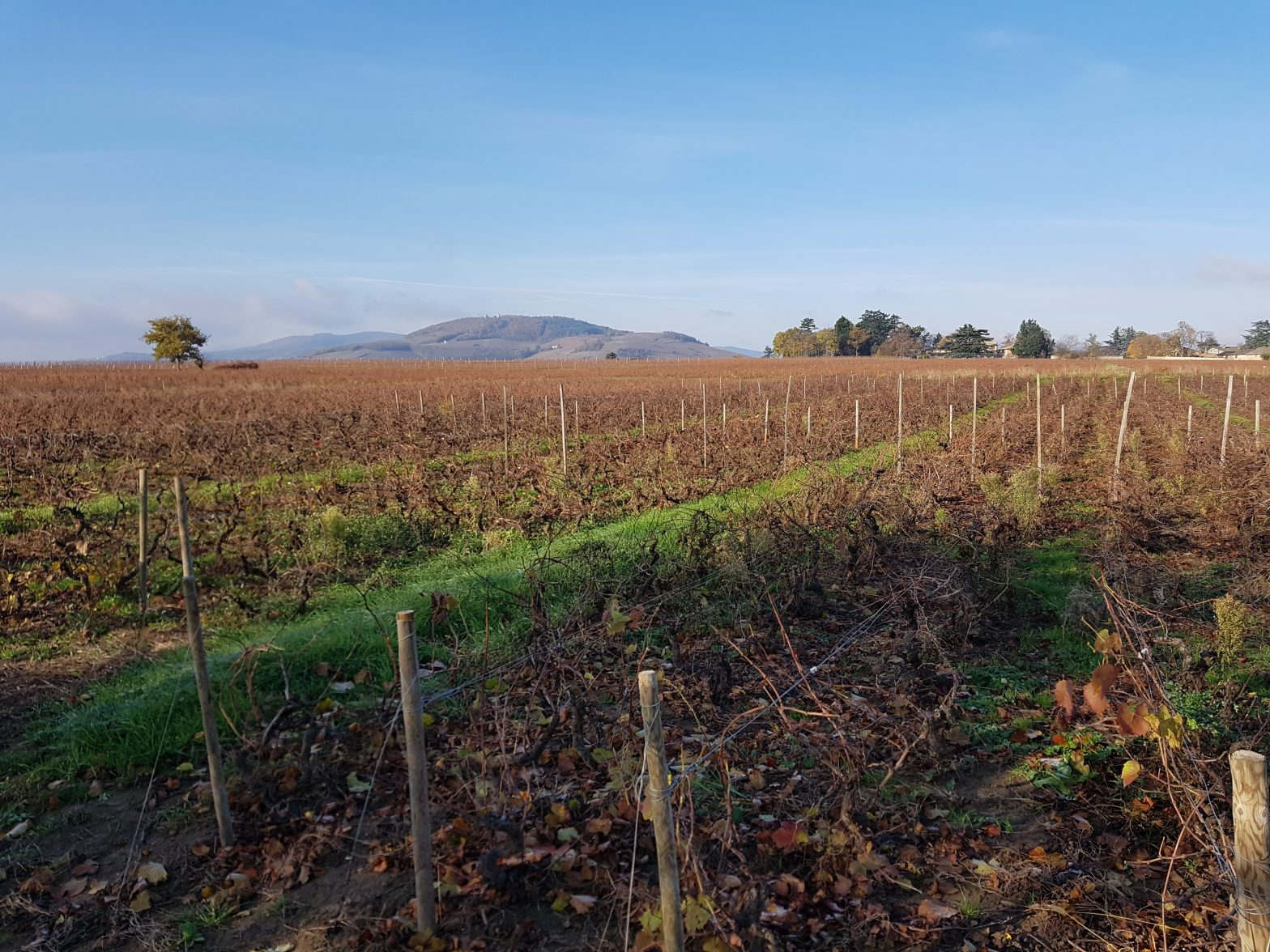 Vineyards to sell of 0.22 HA - beaujolais-en