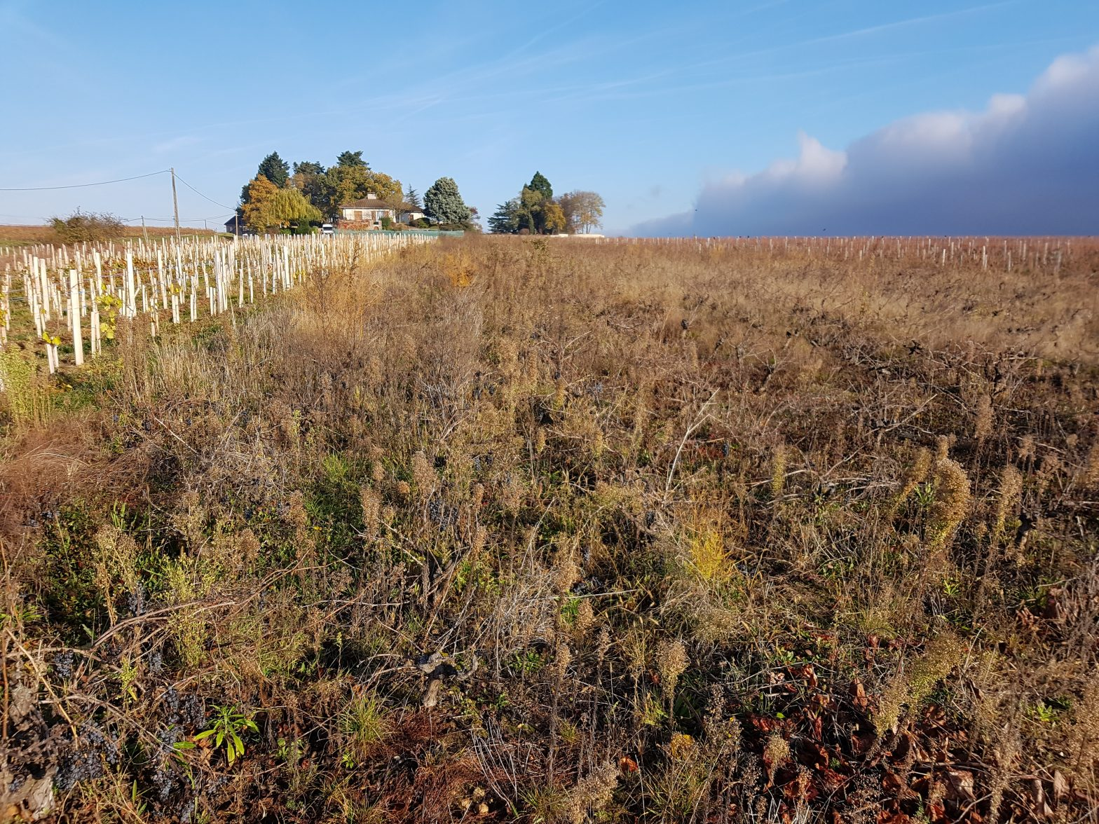 Vineyards to sell of 0.23 HA - beaujolais-en