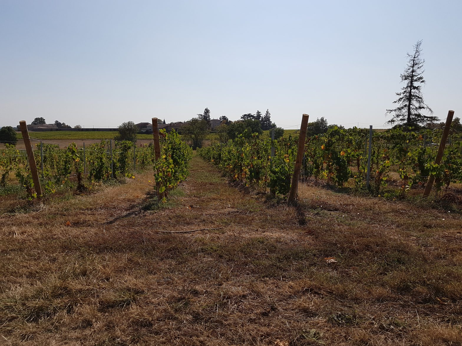 Vineyards to sell of 0.97 HA - beaujolais-en