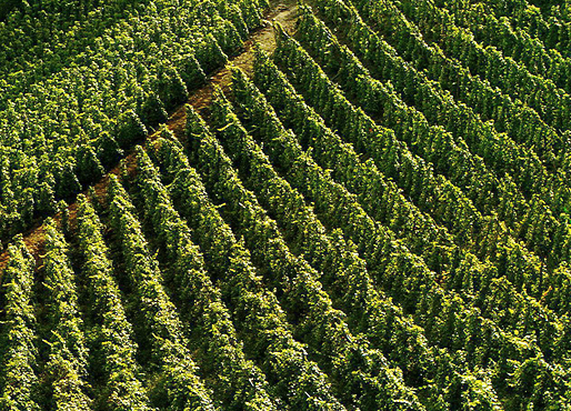 Vineyards to sell of 1.5 HA - vallee-du-rhone-en