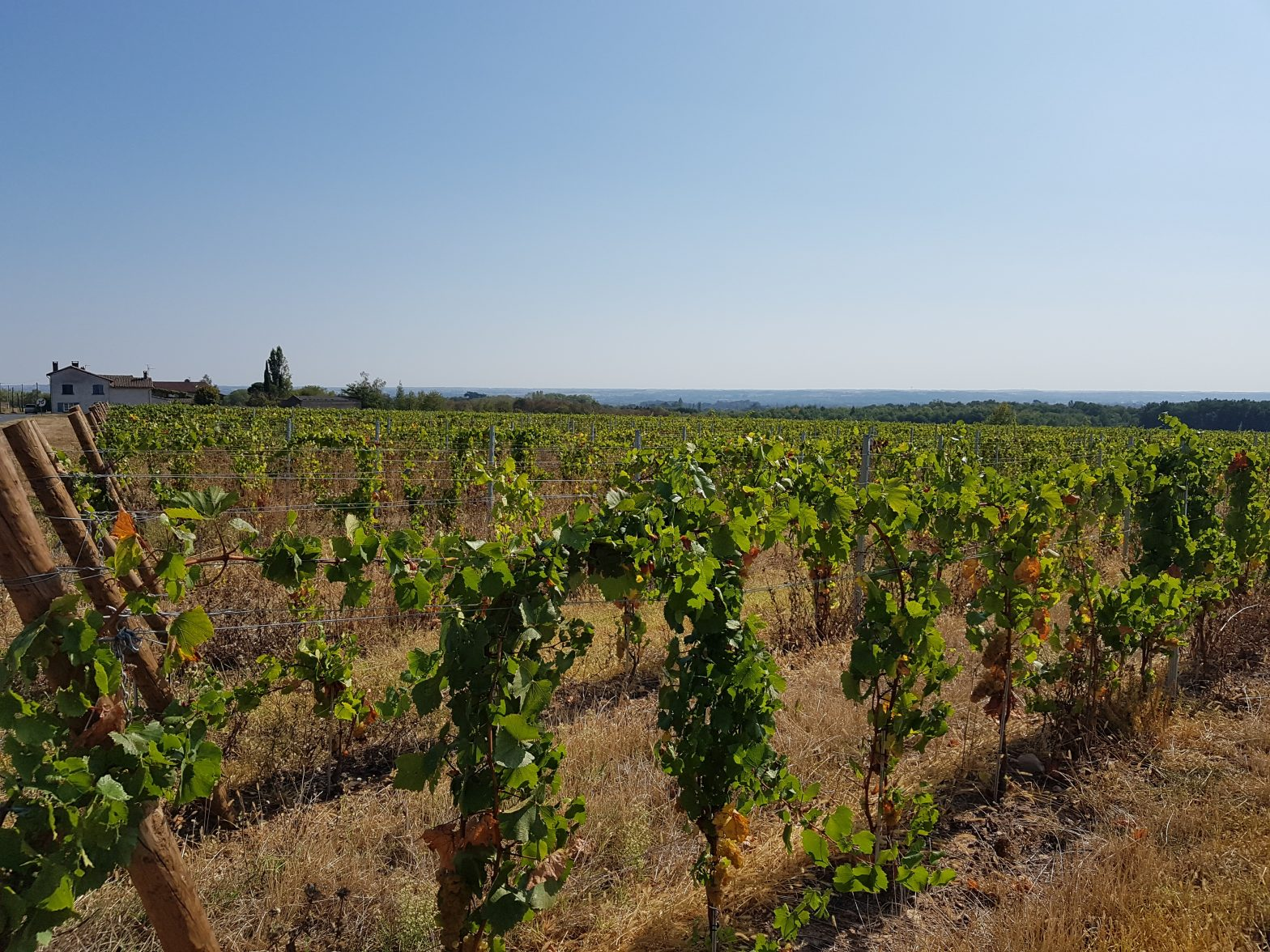 Vineyards to sell of 1.56 HA - beaujolais-en