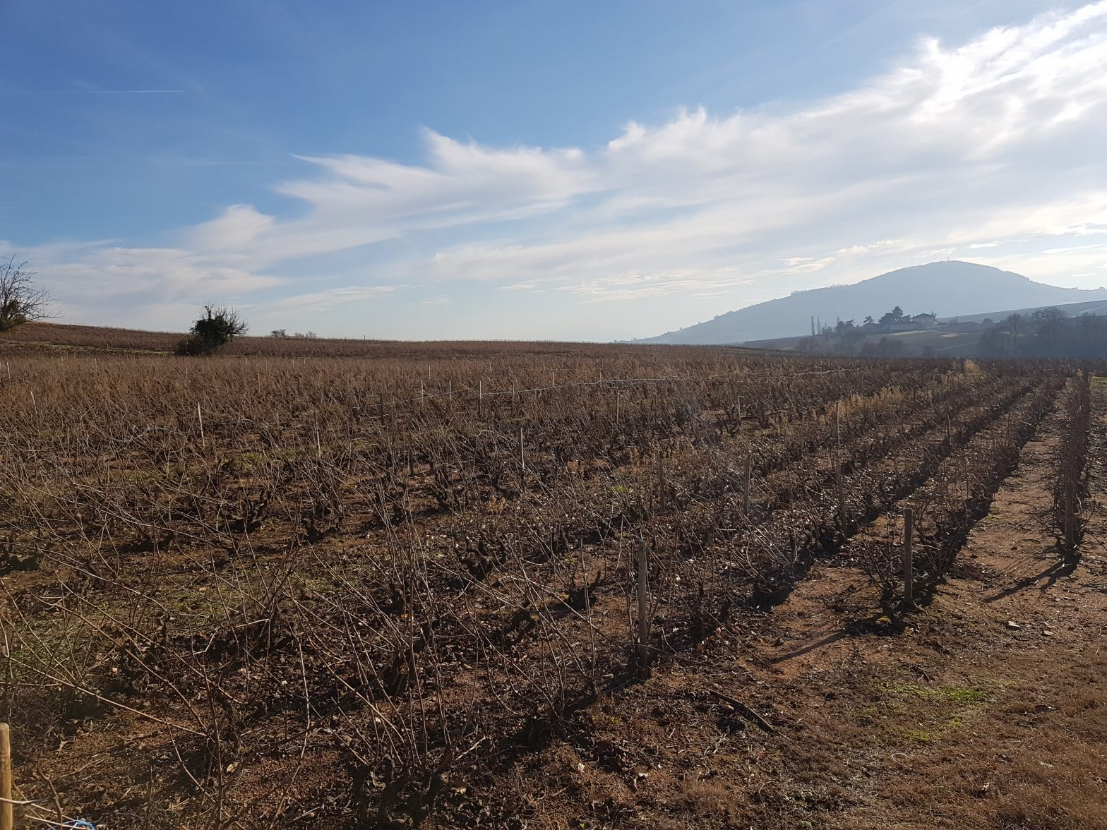 Vineyards to sell of 1.93 HA - beaujolais-en