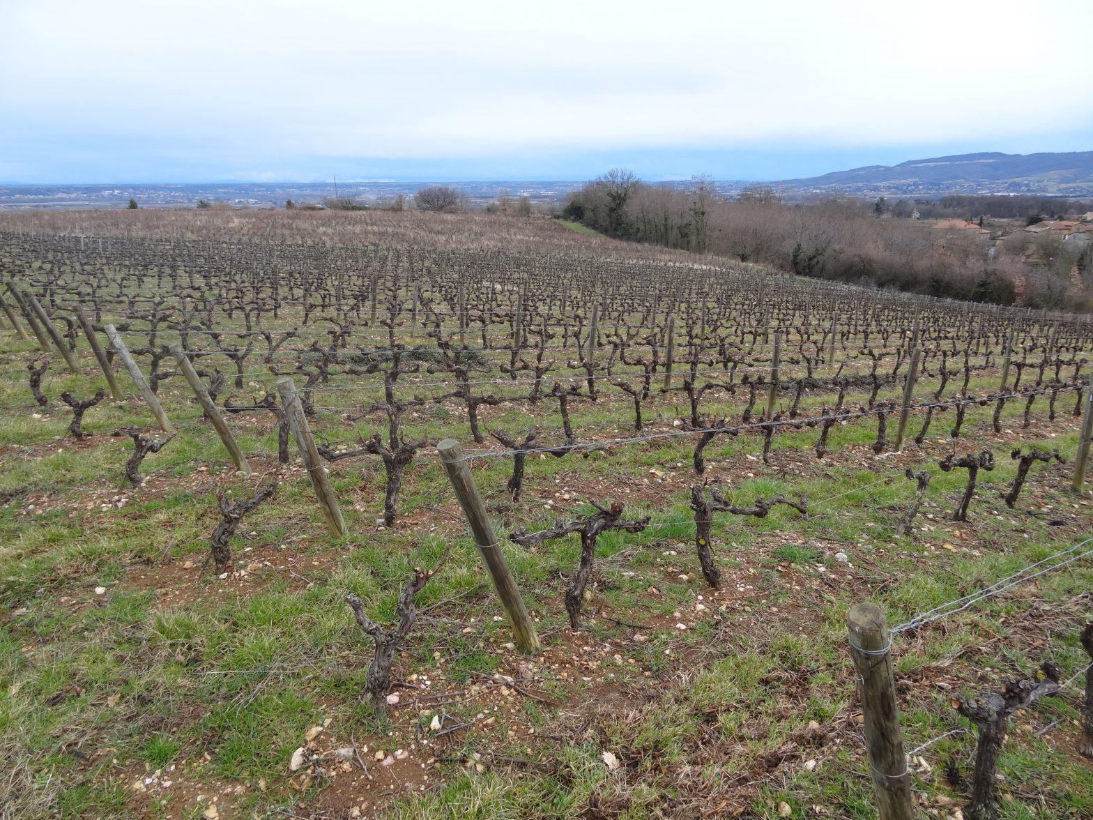 Vineyards to sell of 10.54 HA - beaujolais-en
