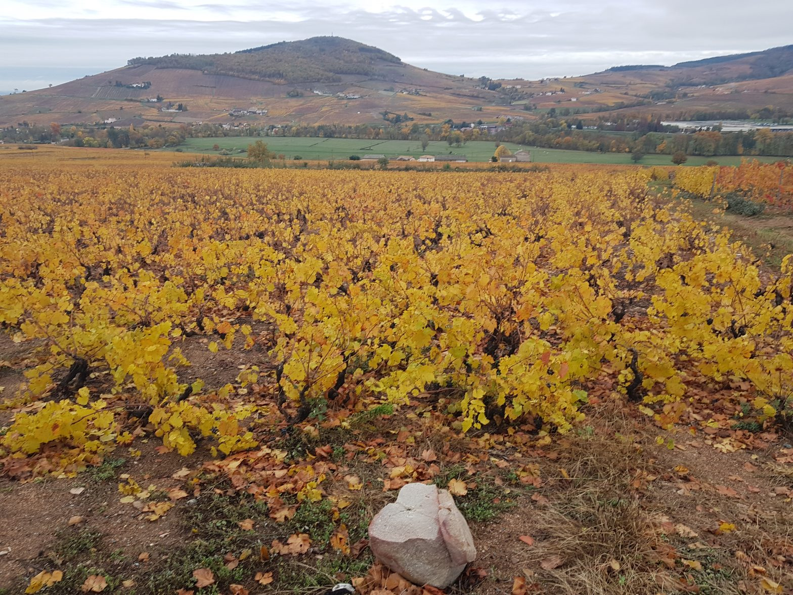 Vineyards to sell of 2.36 HA - beaujolais-en